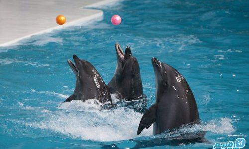 اطلاعات پارک دلفین کیش