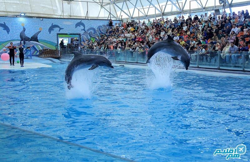 عکس پارک دلفین کیش