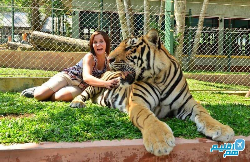 باغ وحش ببرهای پوکت