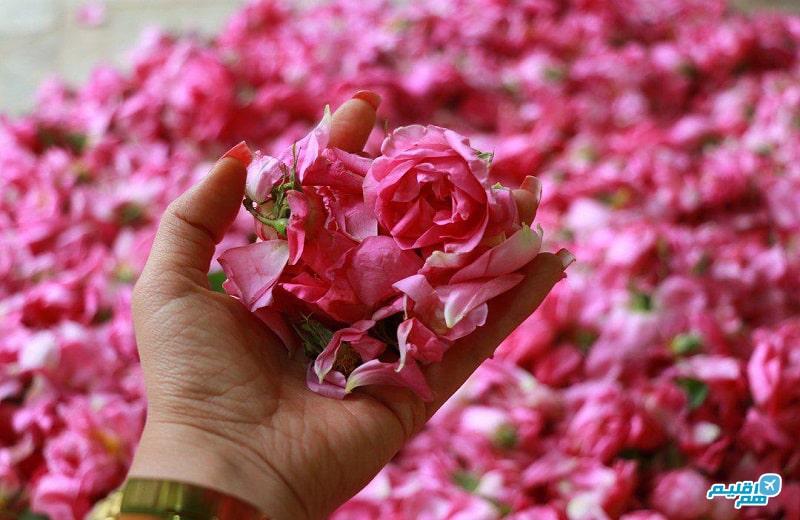 گلاب گیری