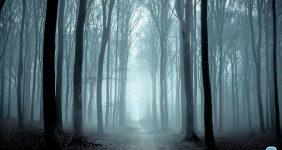 جنگل جیغ در مشهد