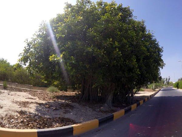 جاهای دیدنی جزیره خارک