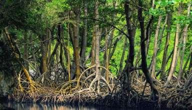 انبوه جنگل های حرا بر روی آبهای خلیج فارس