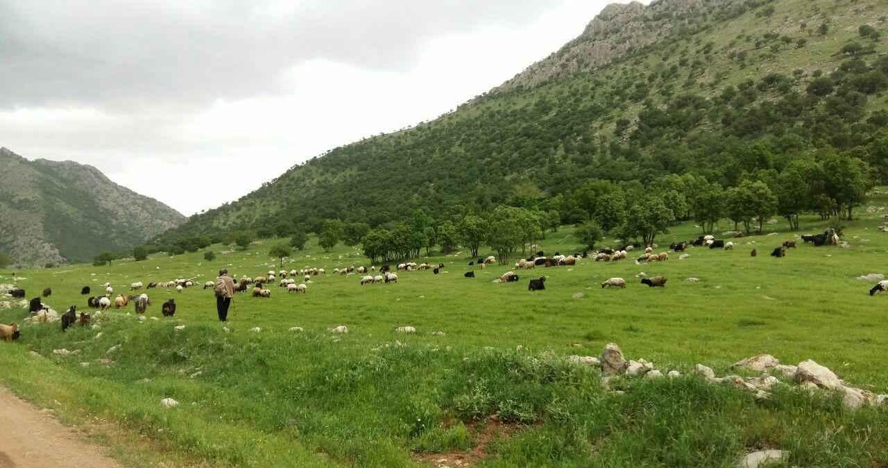 جاهای دیدنی مریوان - Photo: Mohamadi