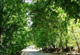 منطقه ییلاقی خلجستان
